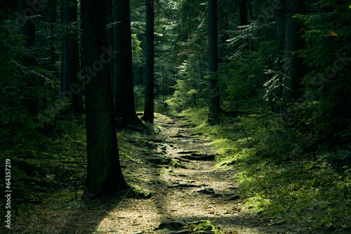 Papiers peints Foret brouillard Green landscape with trees and path