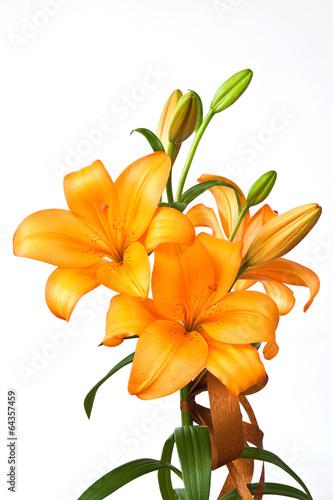 In de dag Narcis Orange lilies