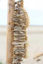 Driftwood On A String Hanging ...
