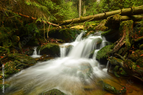 Foto op Canvas forest stream