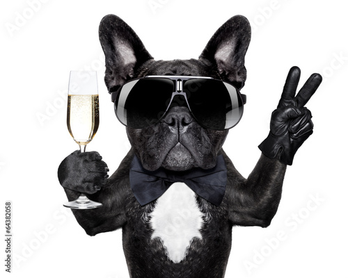 Fotografie, Tablou  cocktail dog
