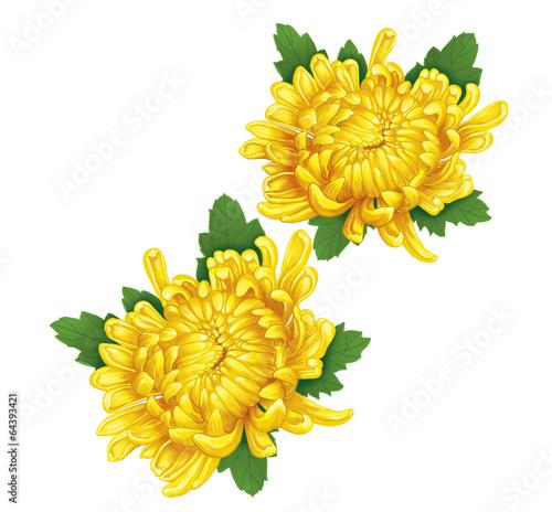 Leinwand Poster chrysanthemum