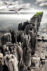 Fototapeta Molo Buhnen am Ostseestrand