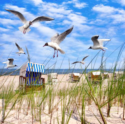 Fototapeta morze Bałtyk mewy-nad-morzem-baltyckim