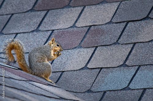 Fotobehang Eekhoorn Cute squirrel sitting on the roof