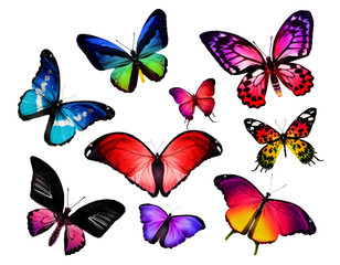 Many different butterflies, isolated on white background
