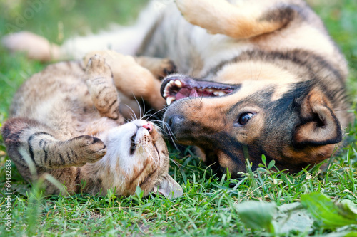 Chat Dog and cat playing together outdoor.Lying on the back together.