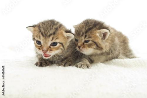 Fototapety, obrazy: striped kittens on the bedspread