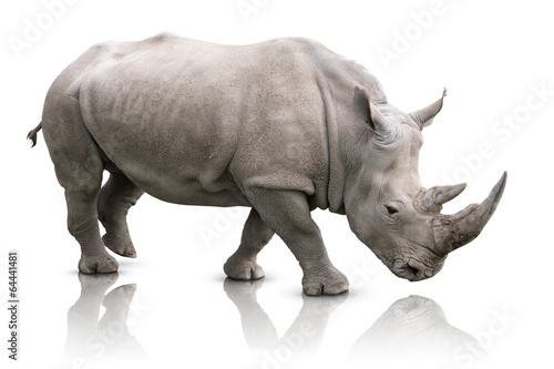 Spoed Foto op Canvas Neushoorn Rhino isolated