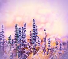 Flowering Beautiful Purple Meadow Flowers