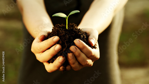 Foto op Canvas Planten Female hand holding a young plant