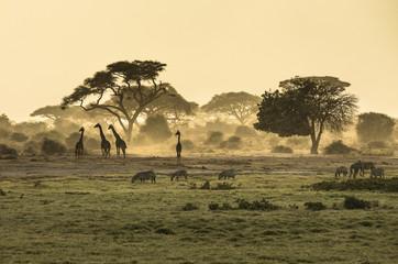 Fototapeta Silhouette di giraffe