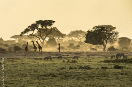Photo Stands Africa Silhouette di giraffe