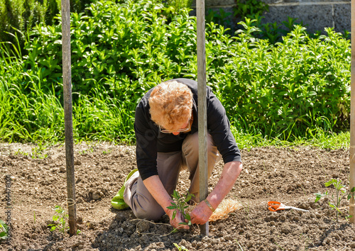 Establishment of guardians in the vegetable garden Poster