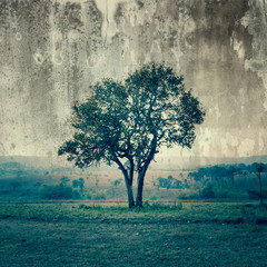 Fototapeta A single tree represent loneliness and sadness