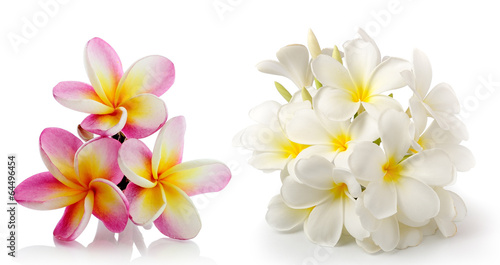 Spoed Foto op Canvas Frangipani frangipani flower isolated on white on white background