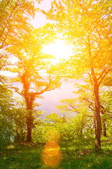 Sun forest with lense flare - Lake Bodensee