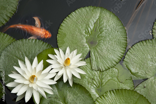 Montage in der Fensternische Wasserlilien Goldfish in Lotus pond
