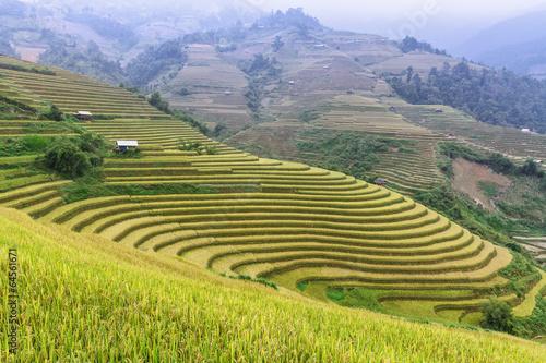 Poster Rijstvelden terraced rice field