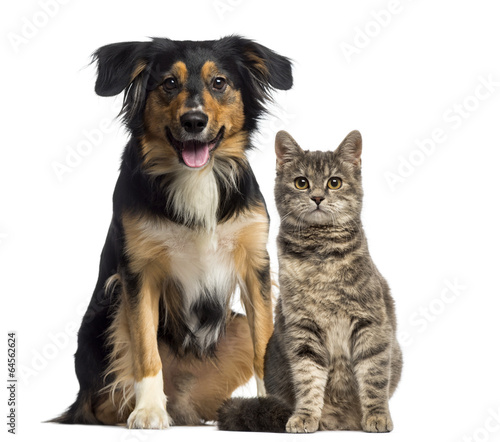 Cat and dog sitting together Wallpaper Mural