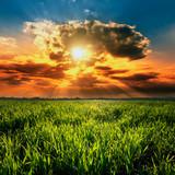 Piękny wschód słońca nad polem przenicy