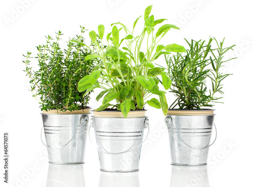 Fototapeta Sage, thyme and rosemary herb plant growing in a distressed pewt obraz