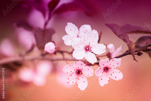 Foto op Plexiglas Crimson White Flowers on Blurred Abstract Background