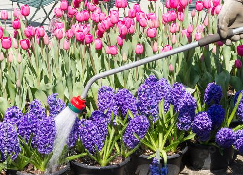 Cadres-photo bureau Jardin Watering garden