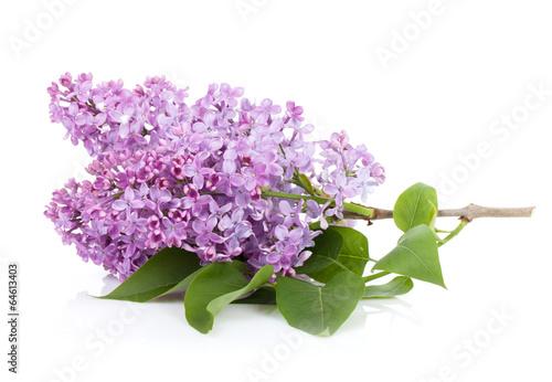 Foto op Canvas Lilac Lilac branch