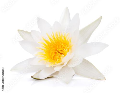 Fotografía Water lily