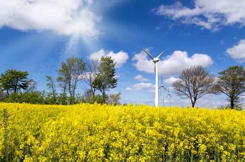 Deurstickers Fietsen Rapsfeld mit Windkraftwerk