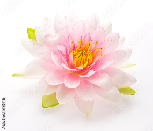 Staande foto Lotusbloem Lotus flower isolated white background