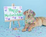 Napis dzień matki namalowany przez psa
