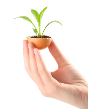 Female Hands Holding Eggshell With Young Green Plant, Isolated