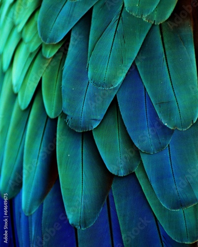 Macaw Feathers (Blue/Green)