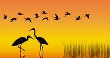 Storks In The Middle Of A Reservoir On An Orange Background