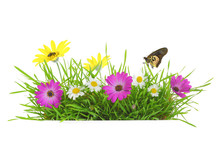 Green Grass With Pink, White And Yellow Flowers Isolated
