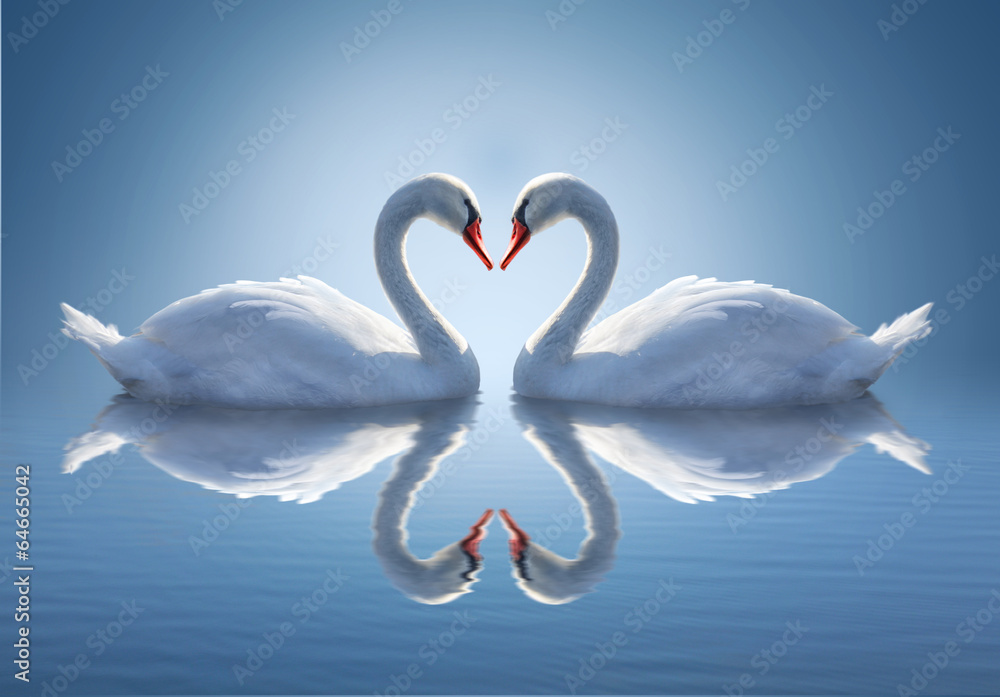 Fototapety, obrazy: Romantic two swans,  symbol of love.