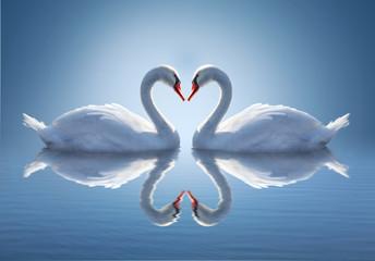 fototapeta romantyczne dwa łabędzie, symbol miłości