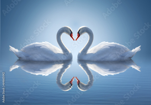 Poster de jardin Cygne Romantic two swans, symbol of love.