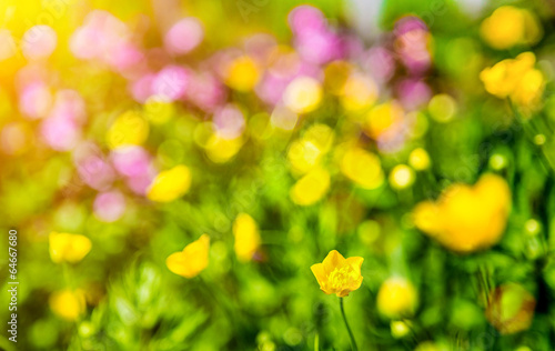 Poster Jaune Dreamy flowers bokeh with lens flare