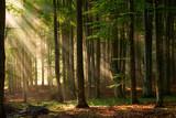 Fototapeta Las - autumn forest trees. nature green wood sunlight backgrounds.