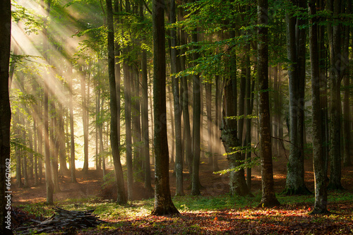 Keuken foto achterwand Weg in bos autumn forest trees. nature green wood sunlight backgrounds.