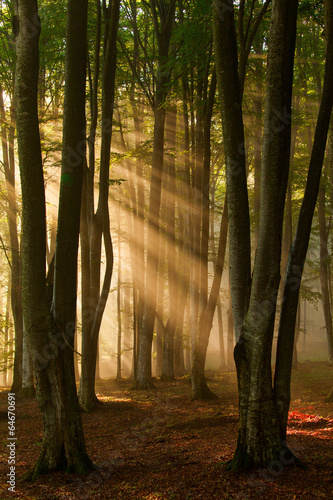 Papiers peints Forets autumn forest trees. nature green wood sunlight backgrounds.