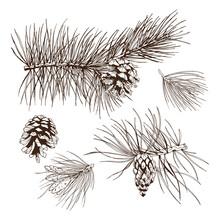 Pine Branches Design Element