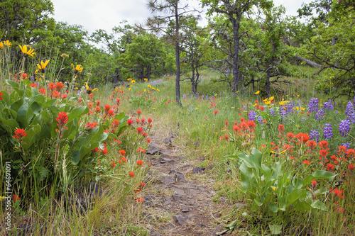 Fotografia, Obraz  Hiking Trail in Columbia River Gorge in Spring