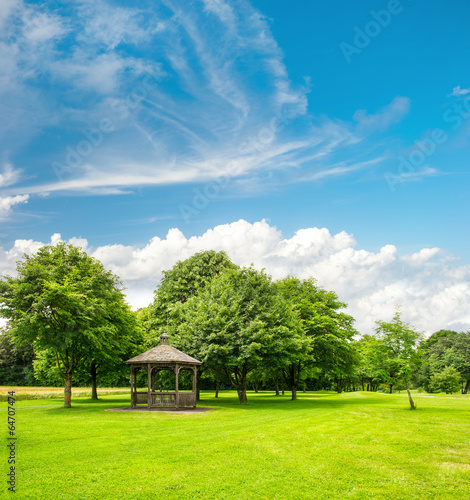 Spoed Foto op Canvas Lime groen green park trees over blue sky