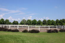 Landscape With Paddock Trees A...