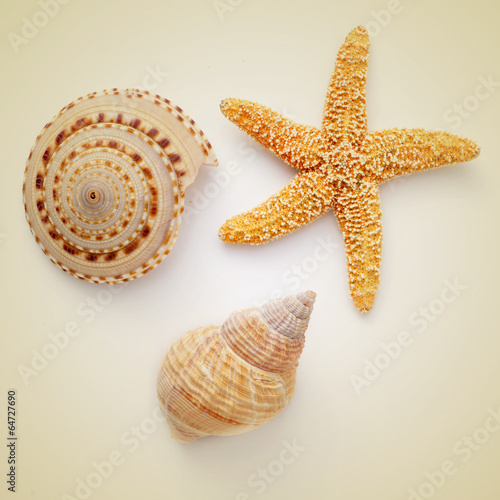 seashells and starfish on a beige background, with a retro effec