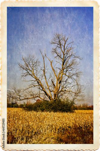 Tree Wallpaper Mural